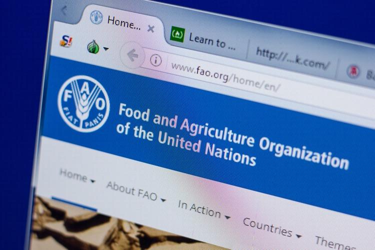 FAO, G20 liderlerini olası gıda tedarik problemlerini önlemeye davet ediyor